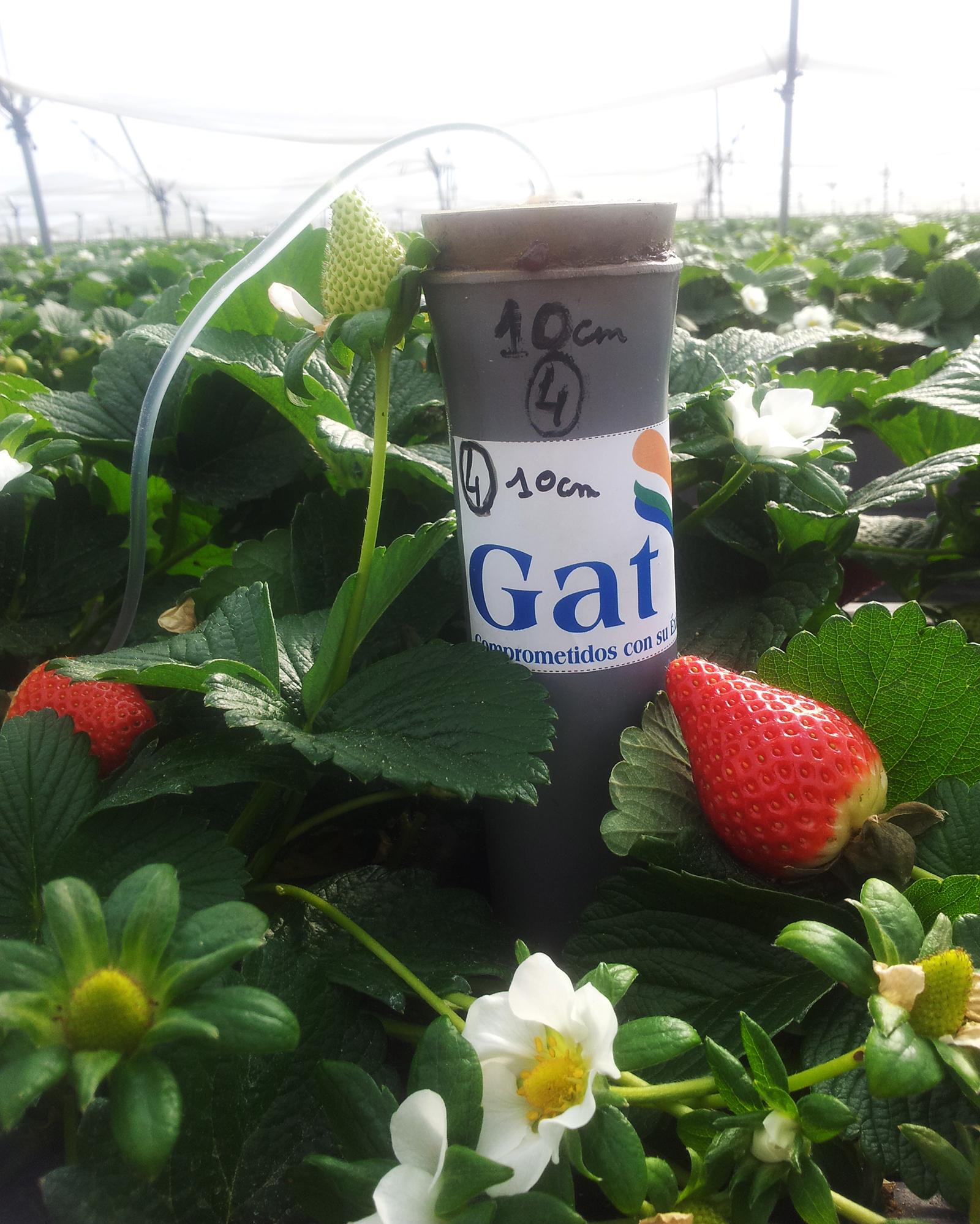 Berries - Cultivos Gat Fertilíquidos
