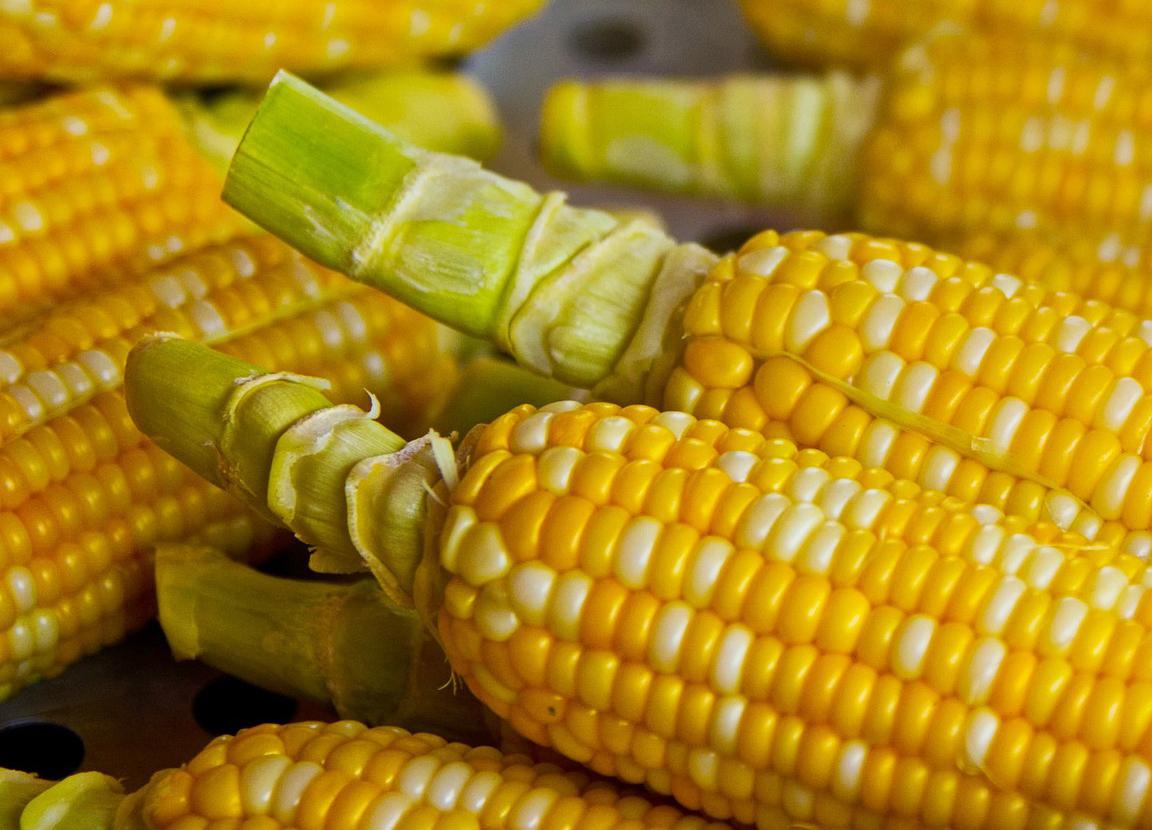 Maíz - Cultivos Gat Fertilíquidos