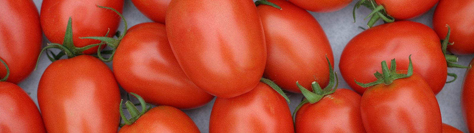 Tomate - Cultivos Gat Fertilíquidos