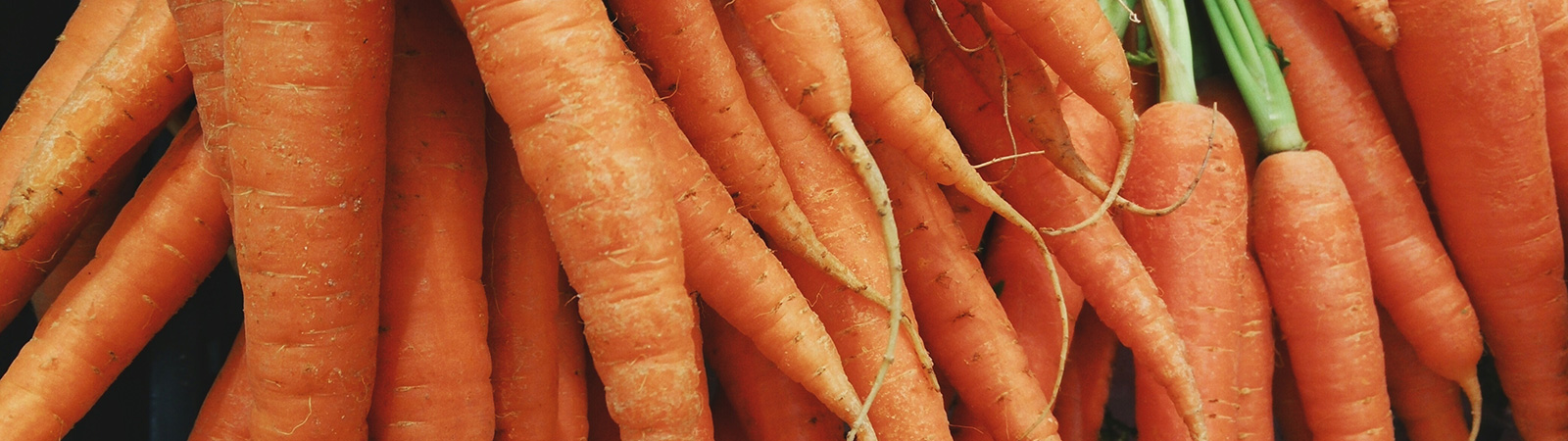 Zanahoria - Cultivos Gat Fertilíquidos