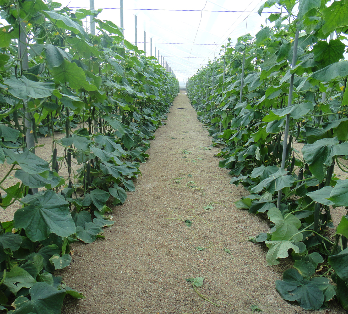 Invernaderos - Cultivos Gat Fertilíquidos