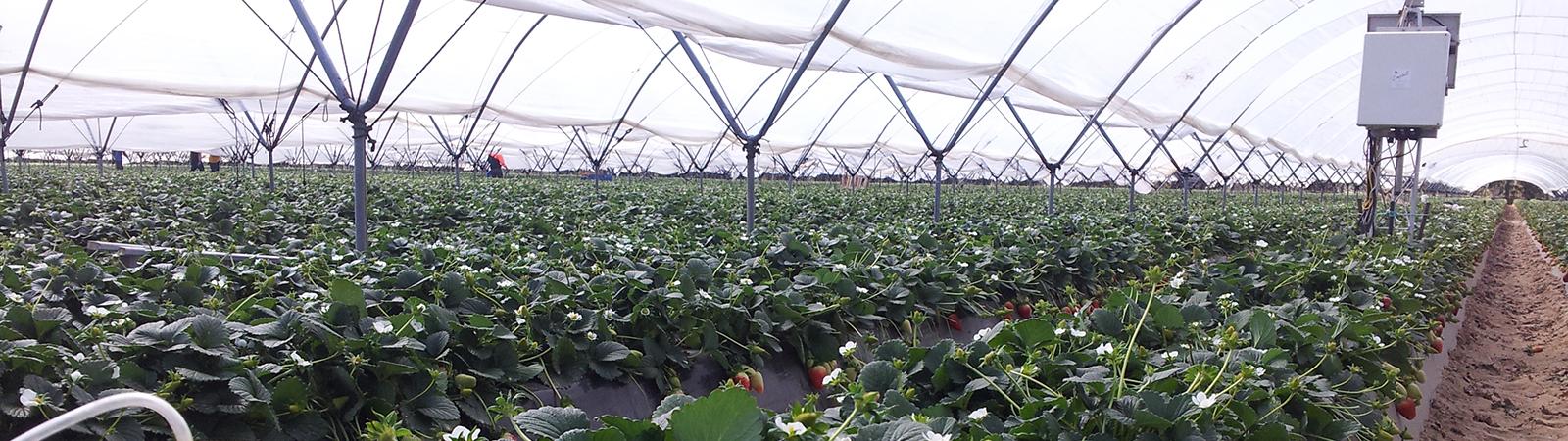 Invernaderos - GAT Fertilíquidos