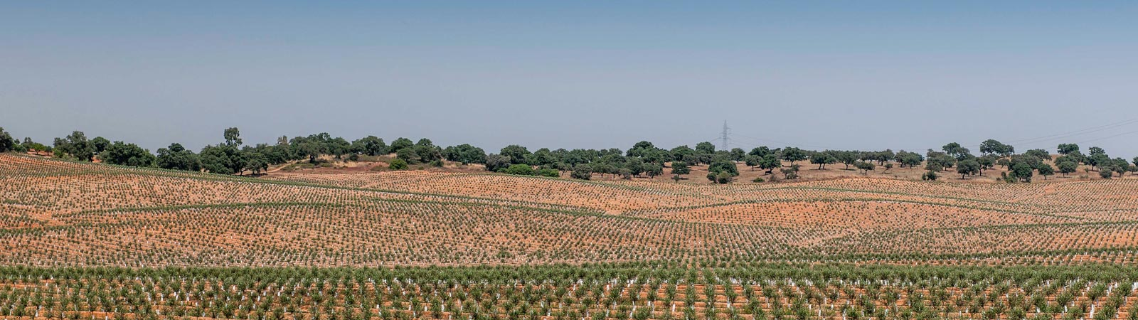 cultivos - Gat Fertilíquidos
